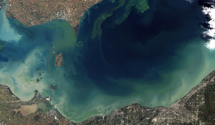 Harmful Algal Bloom Lake Erie 2011