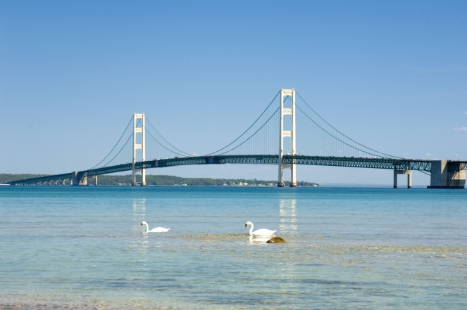 Mackinac Bridge with swnas swimming in the straits, June 2006