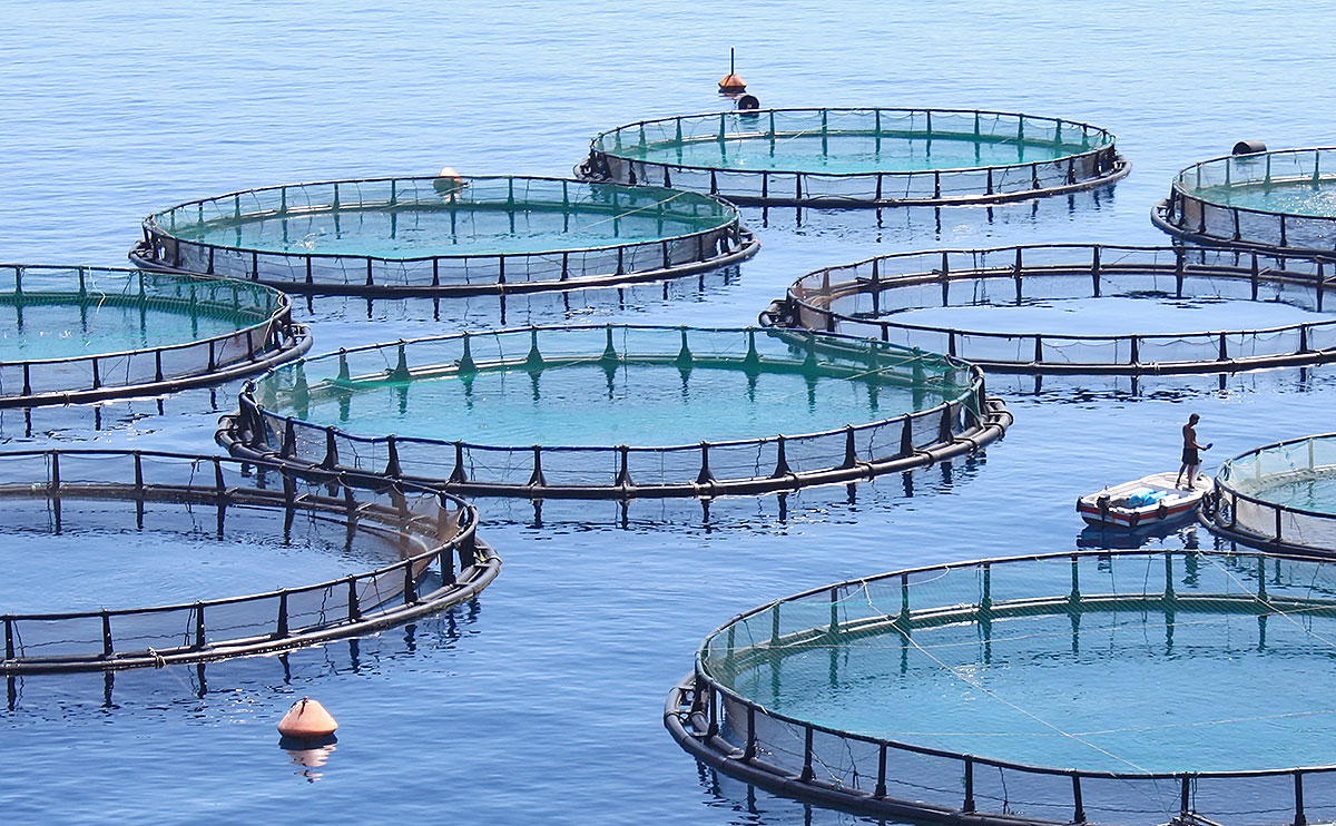 Aquaculture is Threatening the Great Lakes