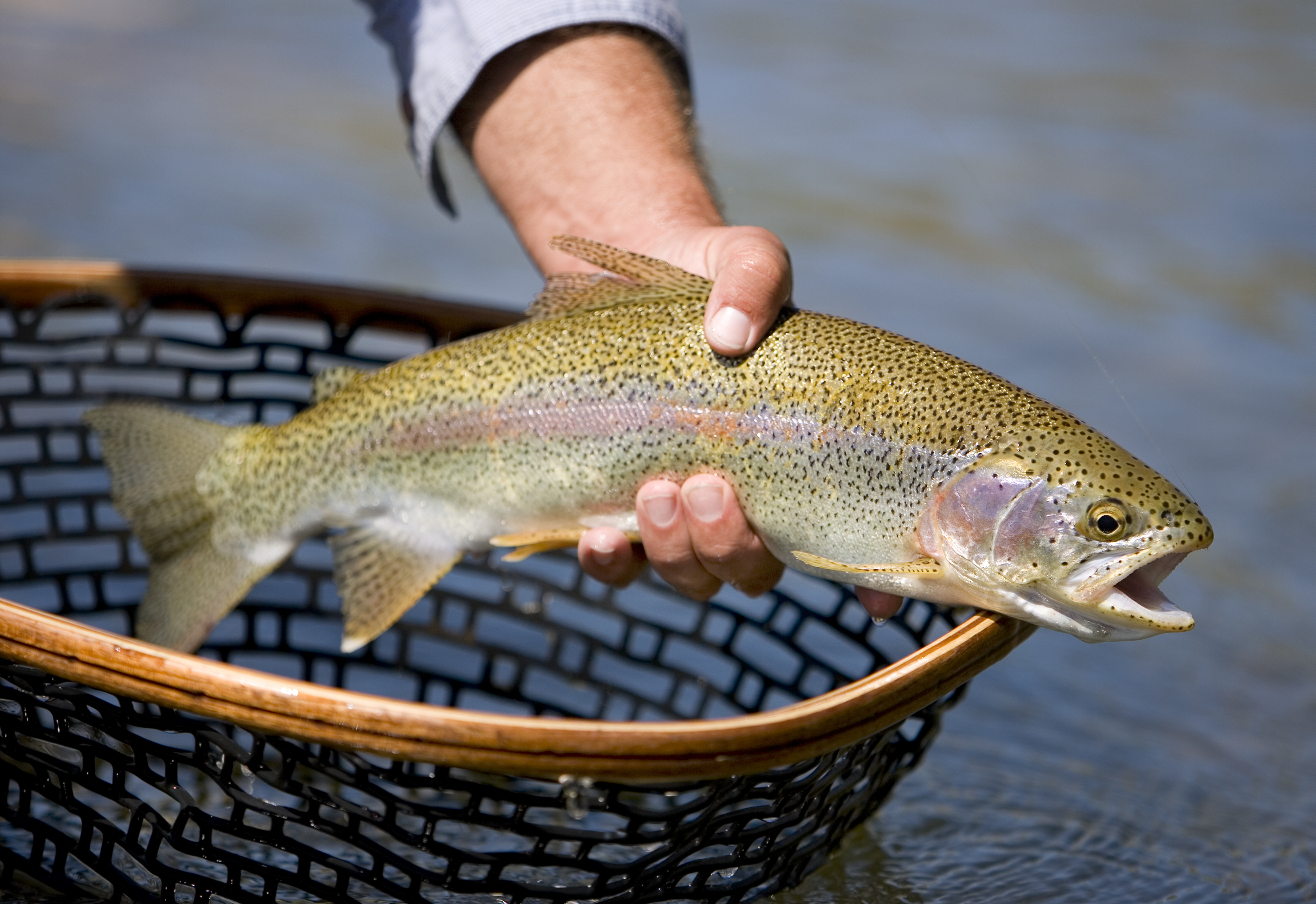 Michigan's Growing Threat: Fish Farming in the Great Lakes & Tributaries