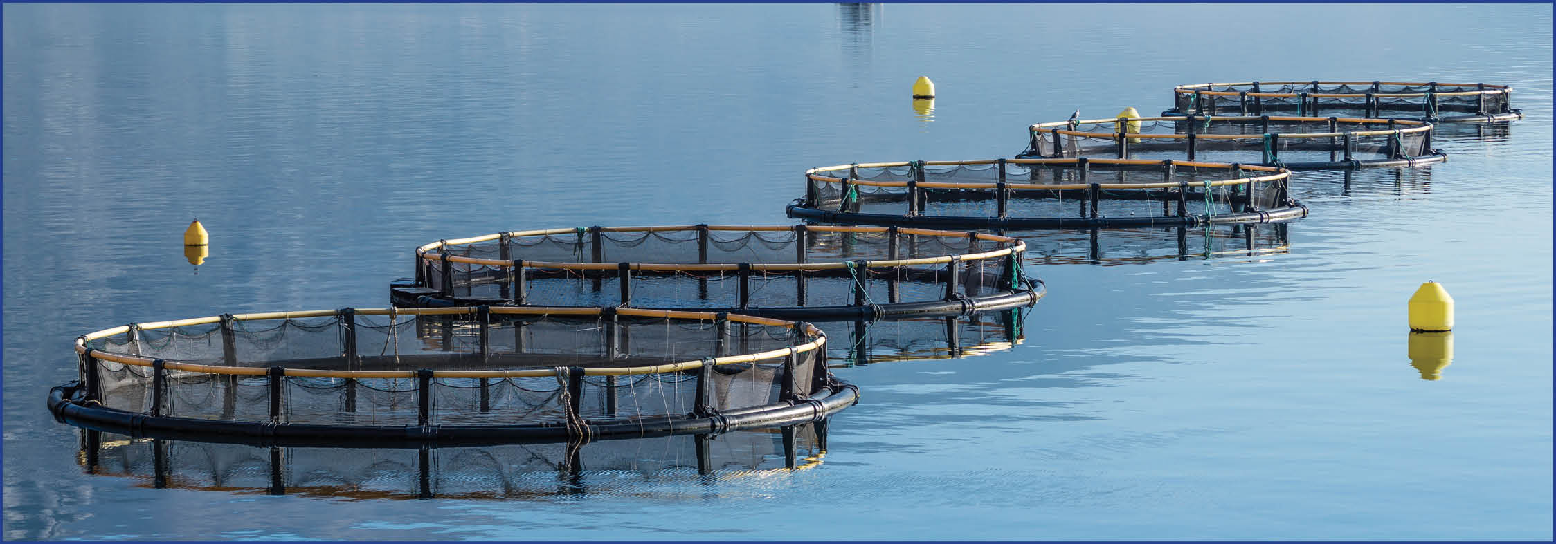 Great Lakes advocates say that commercial net-pen fish farming, pictured above, does not belong in Michigan's public waters.