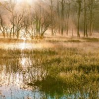 Considering Productivity on World Wetland Day