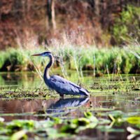 Legislation To Be Considered By Michigan House Leaves Wetlands, Lakes, Streams Unprotected