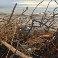 Beach Cleanups Protect Water and Health and Raise Awareness
